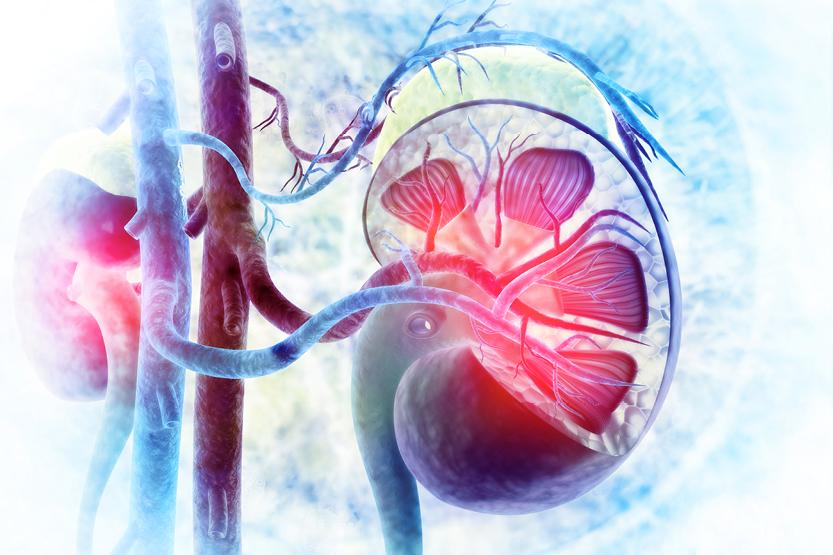 Hroniska nieru slimība